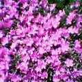 20050525_1406_000.jpg