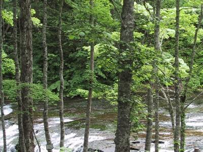 白扇の滝 4